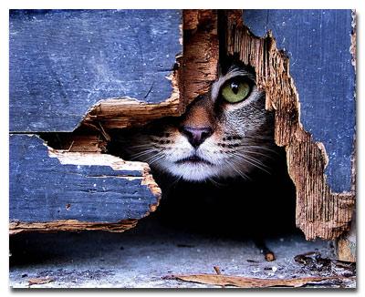 cat_statusy_o_koshkah
