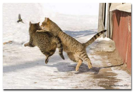 cat_statusy_o_koshkah_2