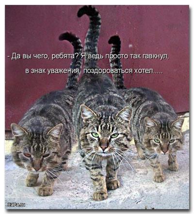 cat_statusy_o_koshkah_5