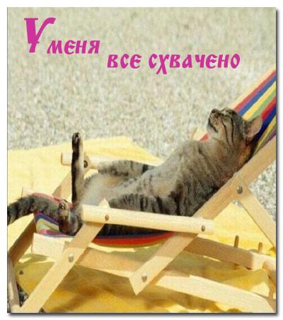 statusy_o_koshkah