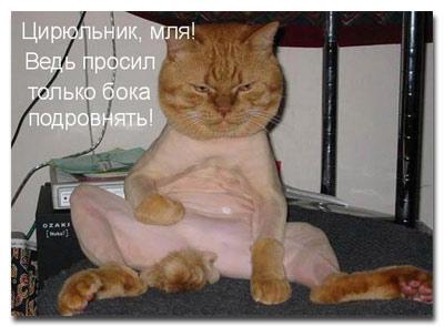 statusy_o_koshkah_4